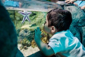 sealife_child_seastar_small